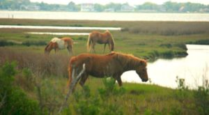 The Most Incredible Place In The US To See Wild Horses Roam
