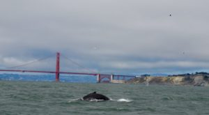 You Can Watch Whales From This One Enchanting Spot In San Francisco Without Ever Leaving The City