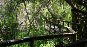 This Wildlife Hike Along The South Carolina Coast Is A Nature Lover's Dream