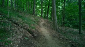 The One Hike In Indiana That Makes You Feel Like You've Landed In A Jungle