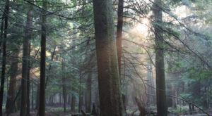 The Ancient Forest Near Pittsburgh That's Right Out Of A Storybook