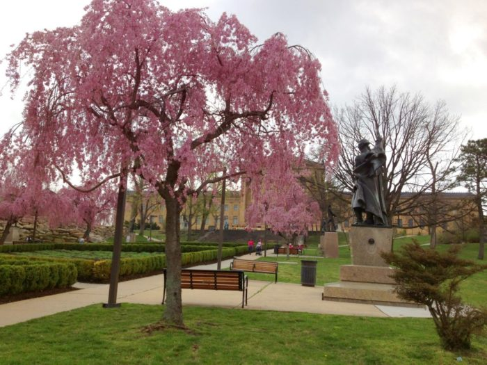 The Subaru Cherry Blossom Festival Is A Magical Place To ...
