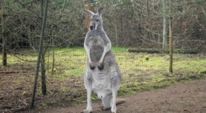 There's A Kangaroo Farm In Washington, And You're Going To Love It