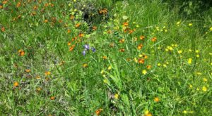 This Easy Wildflower Hike In Minnesota Will Transport You Into A Sea Of Color