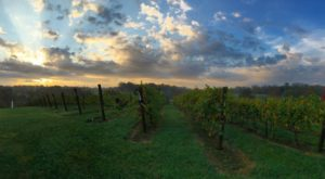 The Most Picturesque Vineyard In Kentucky Will Whisk You Away To Italy