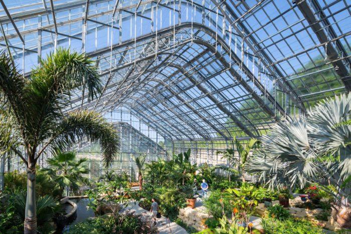 Natural Beauty Plant Omaha