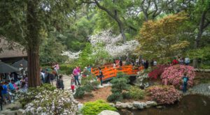 The One Magical Place In Southern California To See Cherry Blossoms This Spring