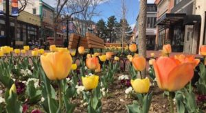 This Enchanting Tulip Festival In Colorado Is All You Need For Spring