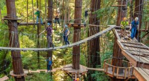 The One Walk Above The Trees In Northern California That's Beautiful Any Time Of Year