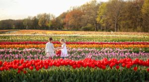 The Enchanting Tulip Farm In Rhode Island You Must Visit This Spring