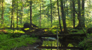 The Ancient Forest In Pennsylvania That's Right Out Of A Storybook