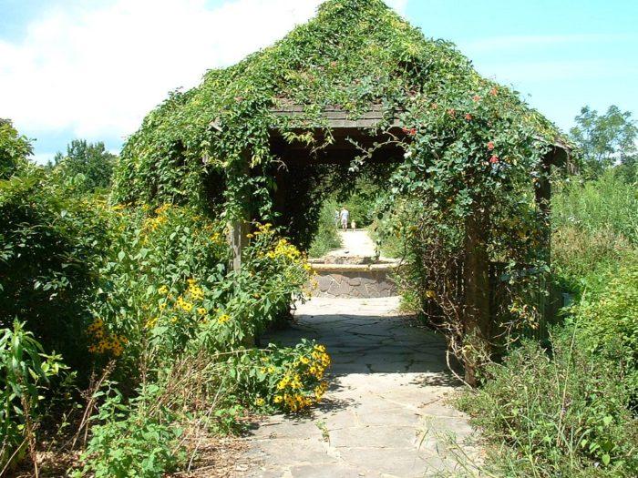 The Wildflower Field At Norfolk Botanical Gardens Is Breathtaking