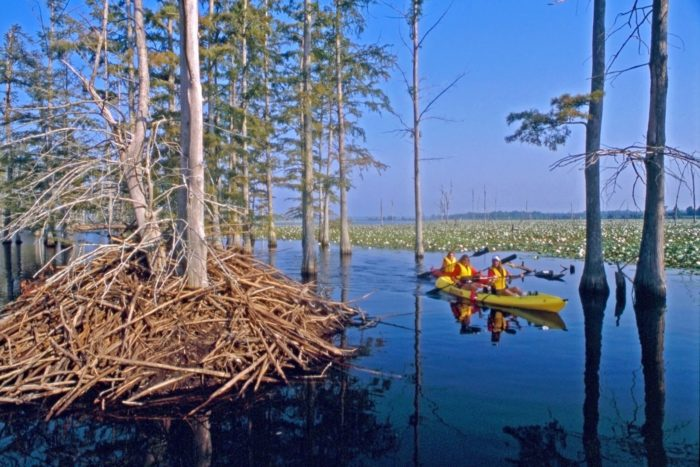 10 arkansas bayous that will transport you to another world facebookstate parks of arkansas freerunsca Gallery
