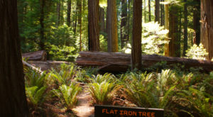 The Ancient Forest In Northern California That's Right Out Of A Storybook