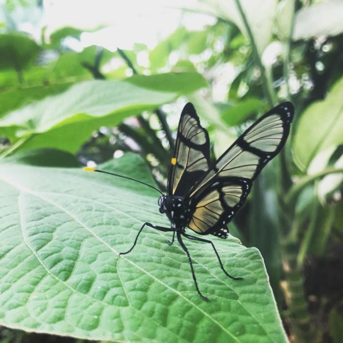 Frederik Meijer Gardens Is Best Butterfly House In Michigan