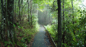 The Ancient Forest In North Carolina That's Right Out Of A Storybook