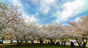 This Enchanting Cherry Blossom Festival In Georgia Is All You Need For Spring