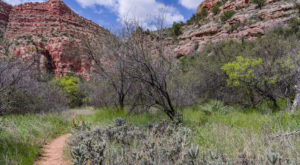8 Easy And Beautiful Spring Hikes Everyone In Arizona Will Love