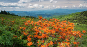 11 Easy And Beautiful Spring Hikes Everyone In Tennessee Will Love