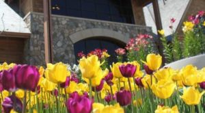 This Enchanting Tulip Festival In South Dakota Is All You Need For Spring