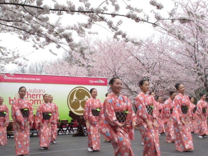 the subaru cherry blossom festival is a magical place to. Black Bedroom Furniture Sets. Home Design Ideas