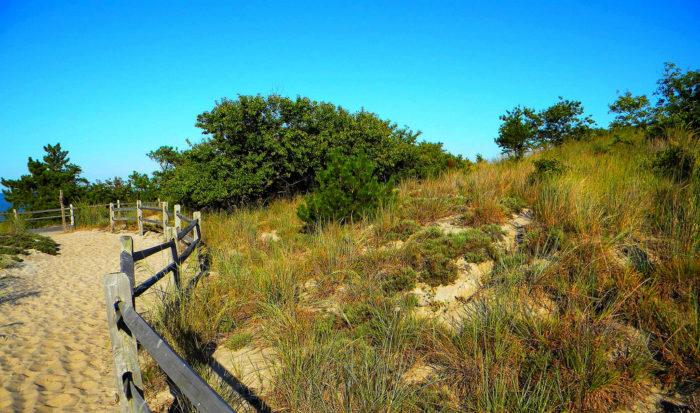 Cape Henlopen Park Nature Center