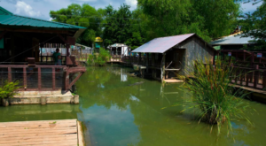 Everyone Should Visit This Incredible Alligator Park In Louisiana At Least Once