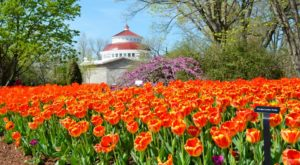 This Enchanting Tulip Festival In Cincinnati Is All You Need For Spring
