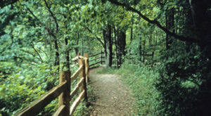 14 Totally Kid-Friendly Hikes In Wisconsin That Are 1 Mile And Under
