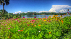 The Fields of Flowers At This New Orleans Park Must Be Seen To Be Believed