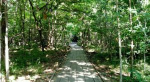 9 Easy And Beautiful Spring Hikes Everyone In Louisiana Will Love
