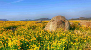 This Easy Wildflower Hike In Oklahoma Will Transport You Into A Sea Of Color