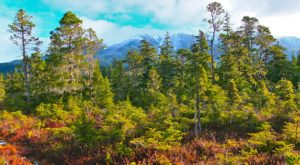 The Ancient Forest In Alaska That's Right Out Of A Storybook