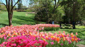 The One Magical Place In Nashville To See Spring Flowers Bloom