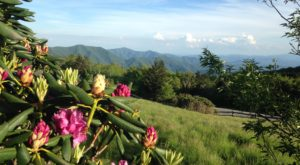 The 7 Wonders Of Tennessee Springtime You Must See Before They're Gone