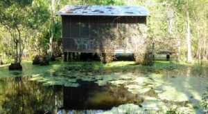 There's An Incredible B&B Hiding In The Middle Of This Swamp Near New Orleans And You Need To Visit