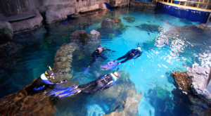 There's A Scuba Park Hiding In Colorado That's Perfect For Your Next Adventure