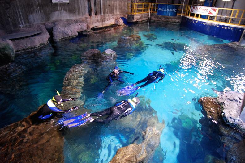 You Can Scuba Dive In Colorado At The Denver Aquarium