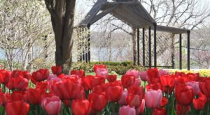 Most People Don't Realize These 7 Secret Gardens Around Kansas Exist