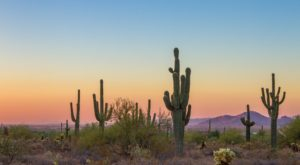 So Many People Are Stealing Cacti In Arizona, They're Being Microchipped And Tracked