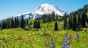 This Easy Wildflower Hike In Washington Will Transport You Into A Sea Of Color