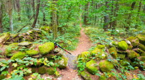 The Ancient Forest In Massachusetts That's Right Out Of A Storybook