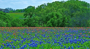 This Easy Wildflower Hike In Texas Will Transport You Into A Sea Of Color