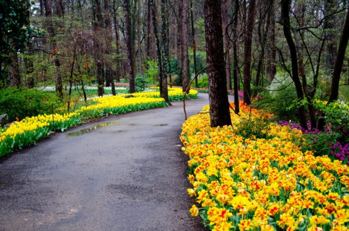 Visit The Garvan Woodland Gardens To Enjoy Arkansas