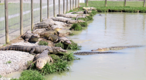This Family-Friendly Gator Farm Is So Perfectly New Orleans