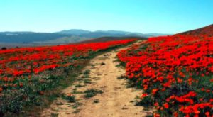 The One U.S. Wildflower Hike That Will Whisk You Away Into A Sea Of Color