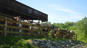 The Quirky Motel In Indiana You Never Knew You Needed To Stay At