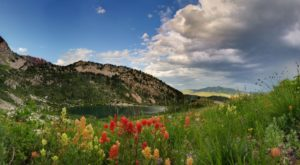 This Easy Wildflower Hike In Utah Will Transport You Into A Sea Of Color