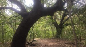 8 Totally Kid-Friendly Hikes In Austin That Are 1 Mile And Under
