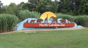 The World's Largest Zoo Is Right Here In North Carolina And You'll Want To Plan Your Visit
